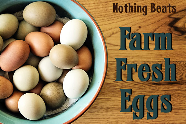 Farm Fresh Eggs at Tip'n the Mitten – Strawberry Fields Featured Vendor