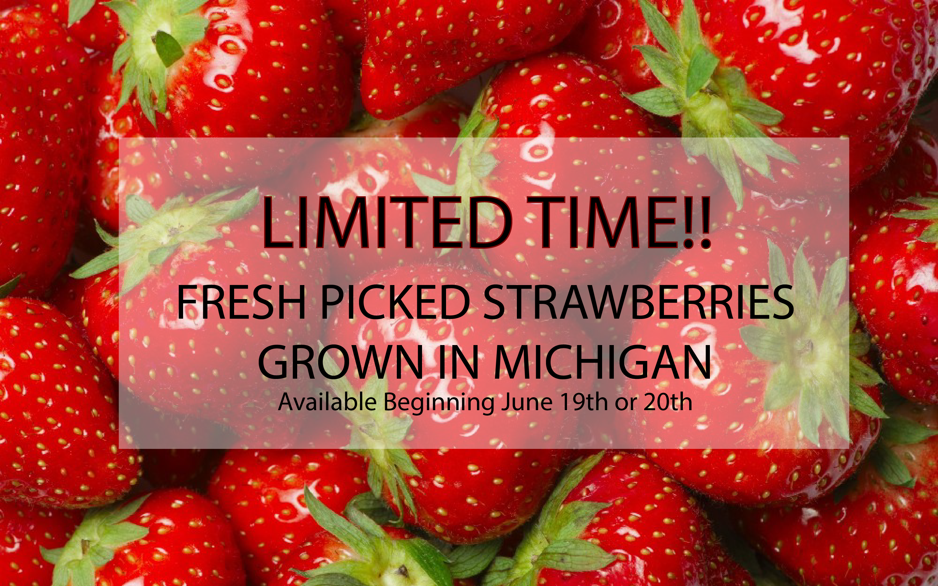 Fresh Picked Strawberries at Tip'n the Mitten – Limited Time Only!